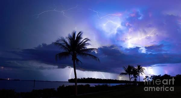 Lightning Bolt Photograph - Palm Tree Nights by Quinn Sedam