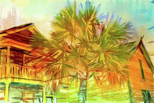 Photograph - Palm Tree Portrait by Alice Gipson