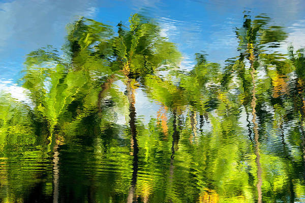 Photograph - Palm Tree Reflection by Christopher Johnson
