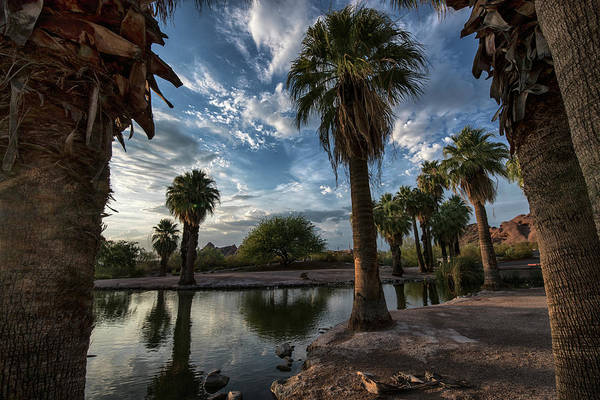 Photograph - Palm Tree Reflections In Papago Park by Dave Dilli