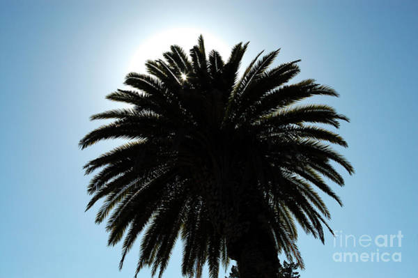 Photograph - Palm Tree Silhouette by Paul Warburton
