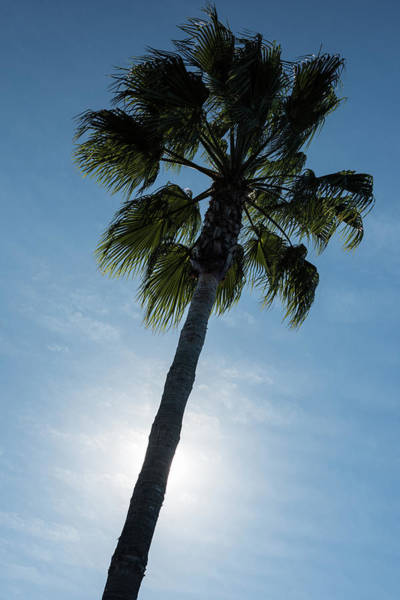 Wall Art - Photograph - Palm Tree by Steve Gadomski