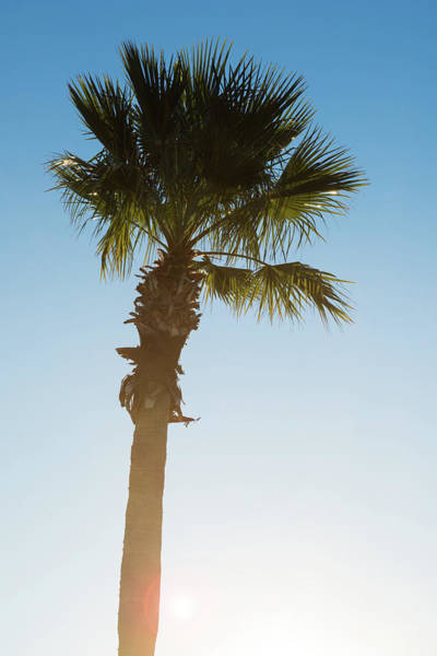 Wall Art - Photograph - Palm Tree Sunrise by Steve Gadomski