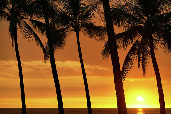Photograph - Palm Tree Sunset by Christopher Johnson