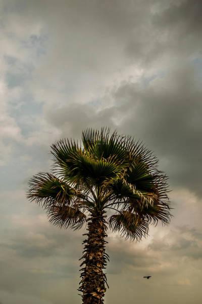 La Libertad Photograph - Palm Tree  by Totto Ponce