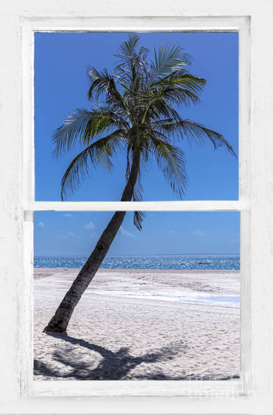 Photograph - Palm Tree Tropical Window View by James BO Insogna