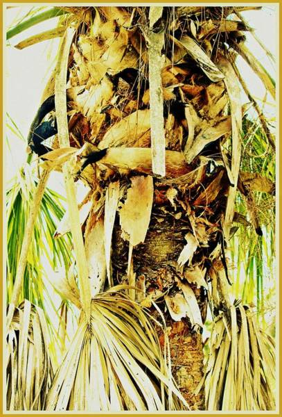 Wall Art - Photograph - Palm Tree Trunk by Mindy Newman