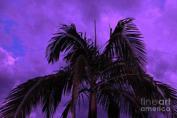 Photograph - Palm Tree Under A Purple Sky by Tracey Everington