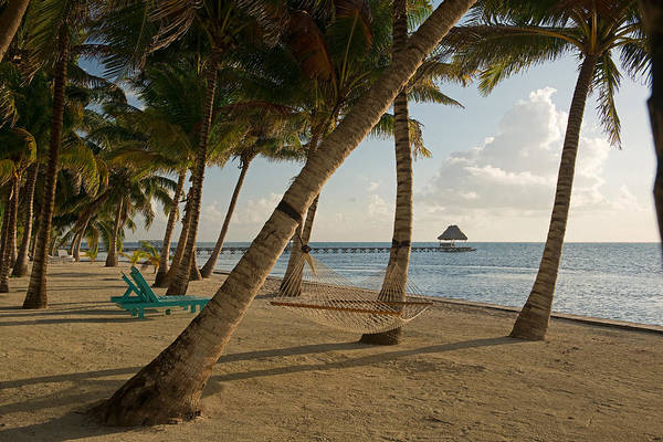 Palapa Wall Art - Photograph - Palm Trees And Hammock On San Pedro by Panoramic Images