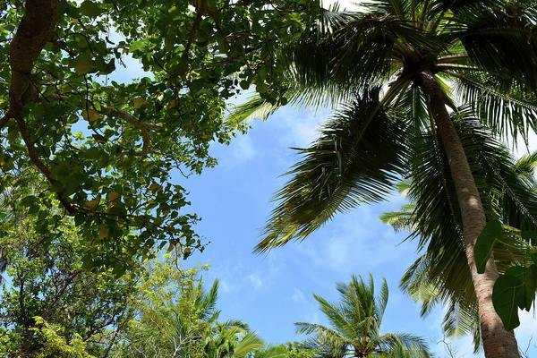 Photograph - Palm Trees And The Blue Sky Background by Oana Unciuleanu