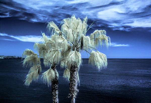 Photograph - Palm Trees At Laguna Beach In Infrared by Randall Nyhof