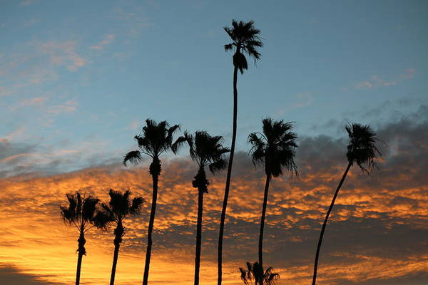 Photograph - Palm Trees At Sunrise  by Christy Pooschke