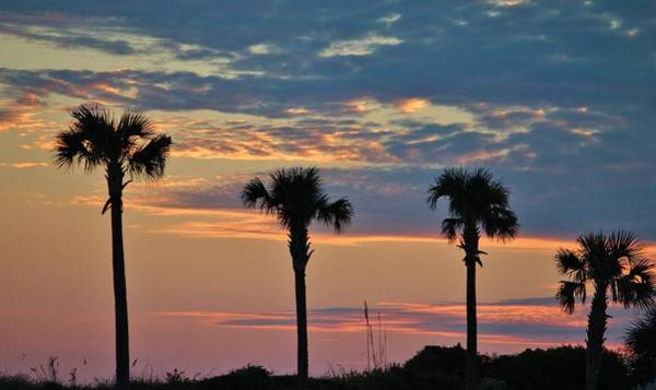 Photograph - Palm Trees At Sunset by Cynthia Guinn