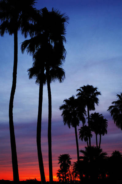 Photograph - Palm Trees At Sunset by Jill Reger