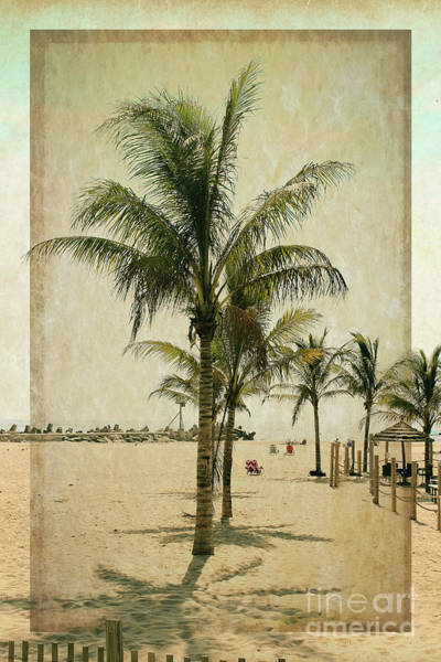 Point Pleasant Photograph - Palm Trees At The Point by Colleen Kammerer
