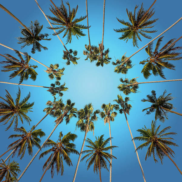California Coast Digital Art - Palm Trees by Bekim M