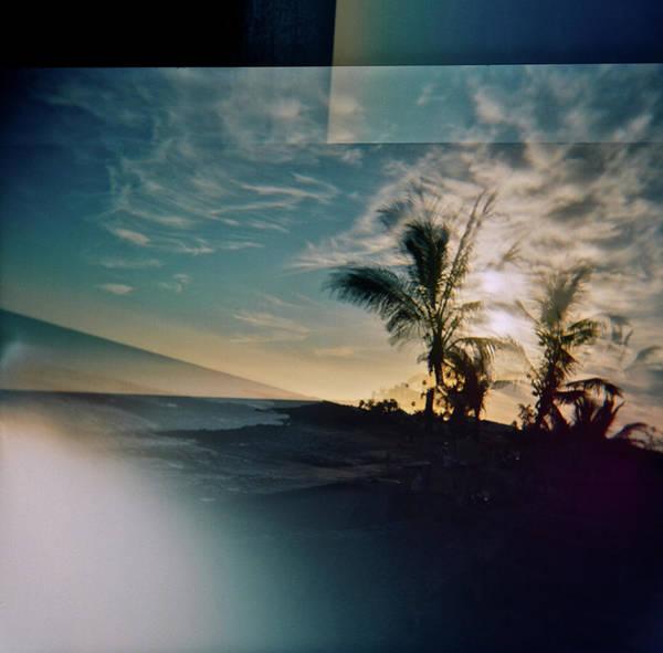 Wall Art - Photograph - Palm Trees Canary Islands by Rika Maja Duevel