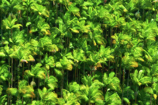 Photograph - Palm Trees by Christopher Johnson