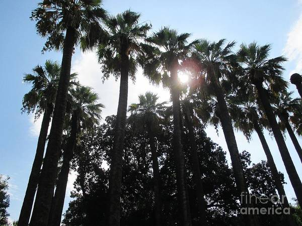 Photograph - Palm Trees In Athens by Chani Demuijlder