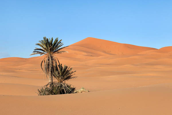 Photograph - Palm Trees In Erg Chebbi by Aivar Mikko