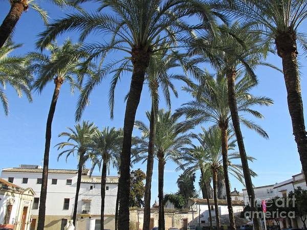 Photograph - Palm Trees In Jerez by Chani Demuijlder