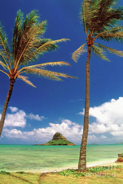 Wall Art - Photograph - Palm Trees In Kaneohe Bay by George Oze