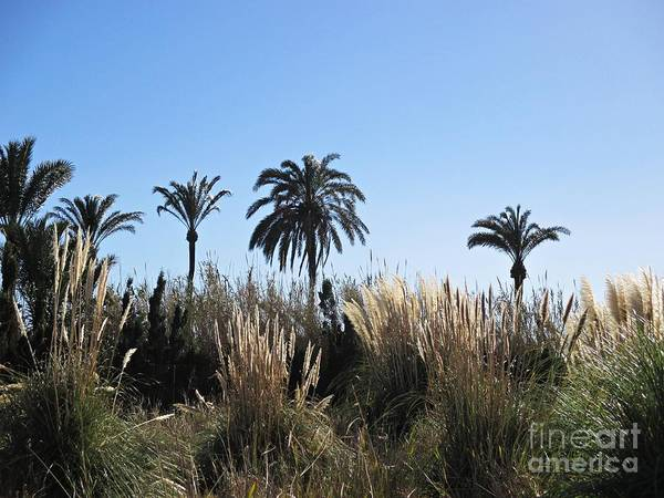 Photograph - Palm Trees In Motril by Chani Demuijlder