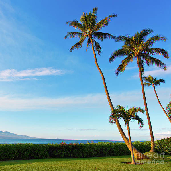 Wall Art - Photograph - Palm Trees In Sunlight On Maui Hawaii by ELITE IMAGE photography By Chad McDermott