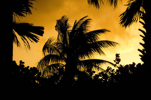 Photograph - Palm Trees In Sunset by Wolfgang Stocker