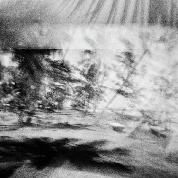 Wall Art - Photograph - Palm Trees India 5 by Rika Maja Duevel