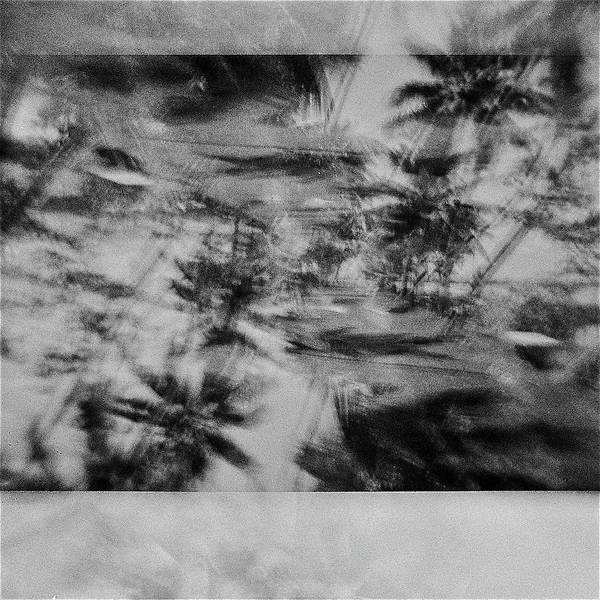 Wall Art - Photograph - Palm Trees India 6 by Rika Maja Duevel