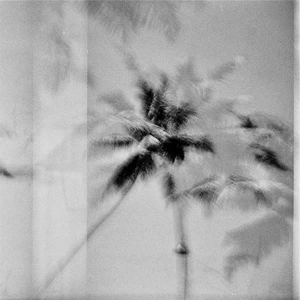 Wall Art - Photograph - Palm Trees India by Rika Maja Duevel