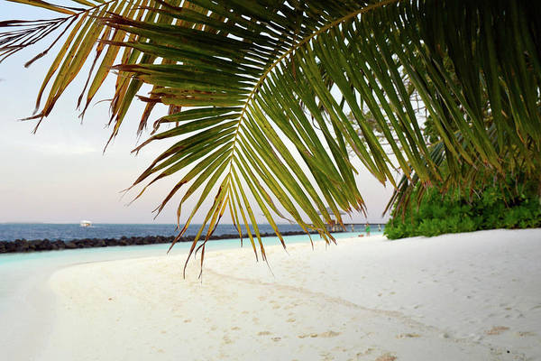 Photograph - Palm Trees On The Beach In Maldives by Oana Unciuleanu