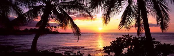 Wall Art - Photograph - Palm Trees On The Coast, Kohala Coast by Panoramic Images