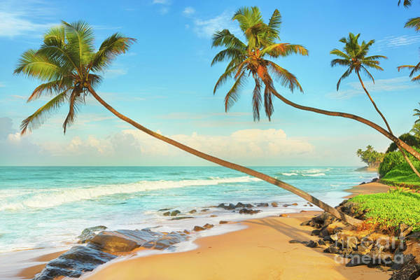 Srilanka Wall Art - Photograph - Palm Trees Over The Sea by MotHaiBaPhoto Prints