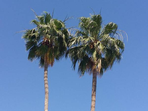 Photograph - Palm Trees, Swingin' In The Breeze by Sarah Marie