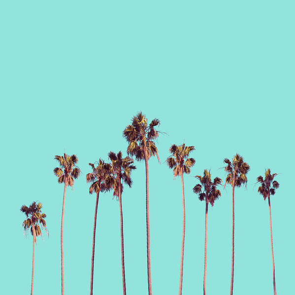 California Coast Digital Art - Palm Trees Turquoise by Bekim M