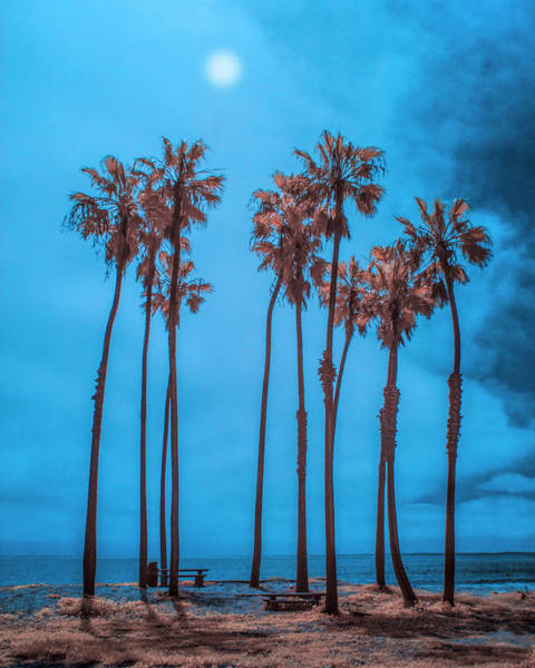 Photograph - Palm Trees With Sun In Infrared By Cabrillo Beach by Randall Nyhof