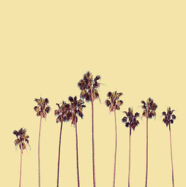 California Coast Digital Art - Palm Trees Yellow by Bekim M