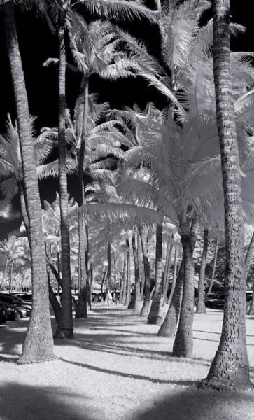 Wall Art - Photograph - Palm Walkway by Sean Davey