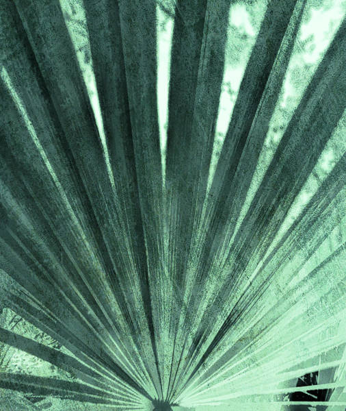 Fronds Photograph - Palmetto Abastract No. 4 by Marvin Spates