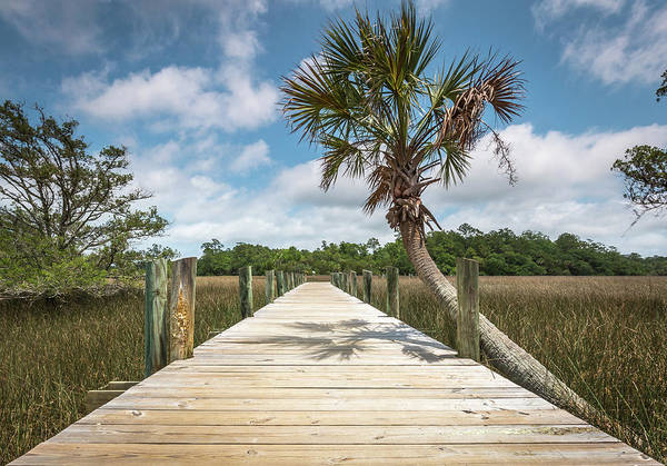 Photograph - Palmetto Islands County Park Boardwalk by Donnie Whitaker