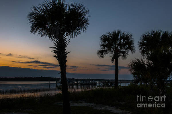 Photograph - Palmetto Sky by Dale Powell