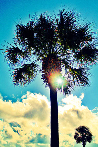 Photograph - Palmetto South by Stacey Rosebrock