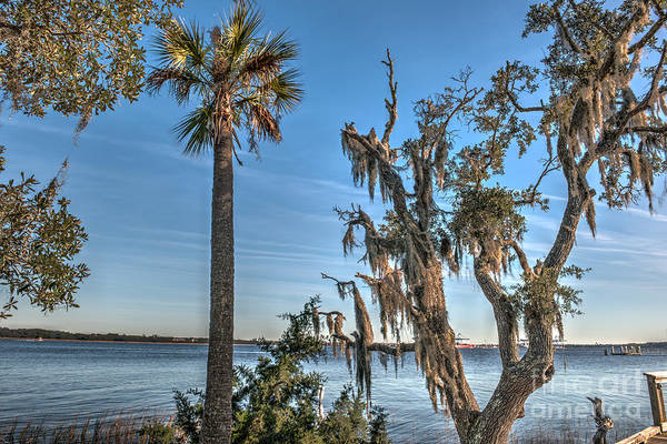 Photograph - Palmetto State View by Dale Powell