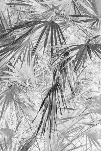 Photograph - Palmettos Negatives by Dorothy Cunningham