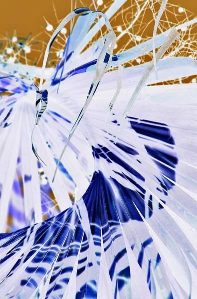 Palm Frond Digital Art - Garden Party by John Hintz