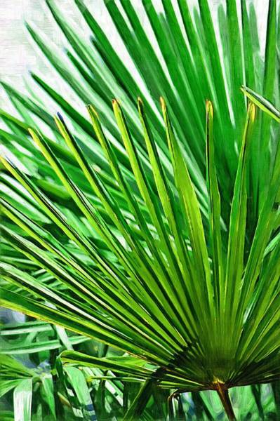 Photograph - Palms 2 by Donna Bentley