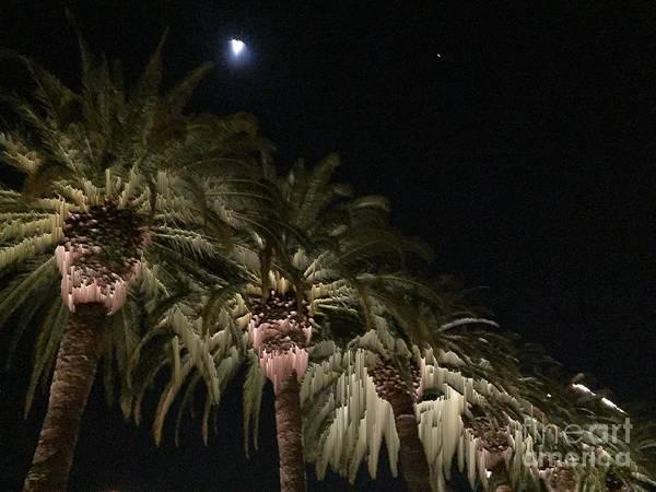 Photograph - Palms And Moon by Jenny Revitz Soper