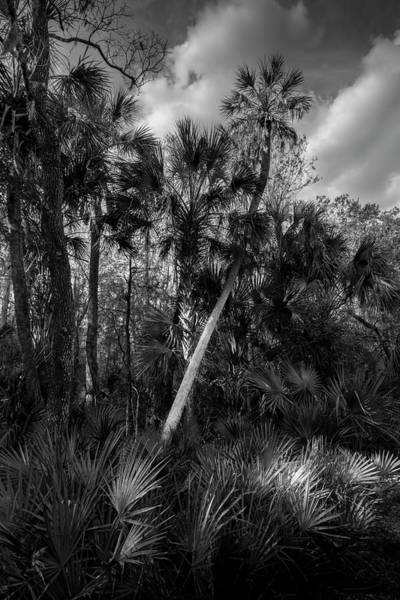 Cypress Knees Photograph - Palms And Palmettos by Marvin Spates
